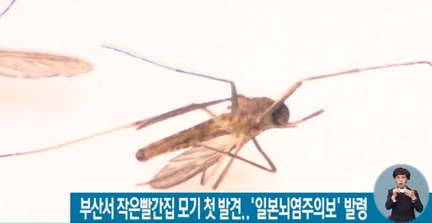 SBS 뉴스 화면 캡처