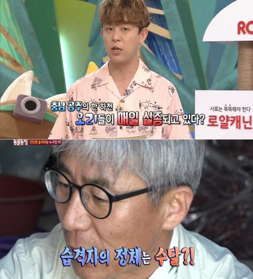 SBS 'TV동물농장' 캡쳐