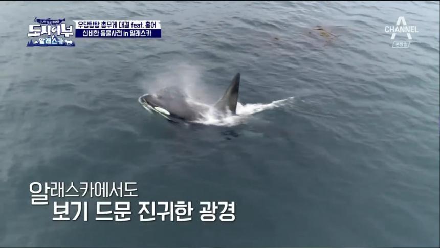 채널A '도시어부' 방송 캡처