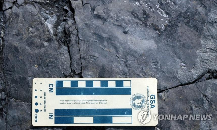 세계에서 가장 작은 랩터 공룡발자국 화석 / 연합뉴스