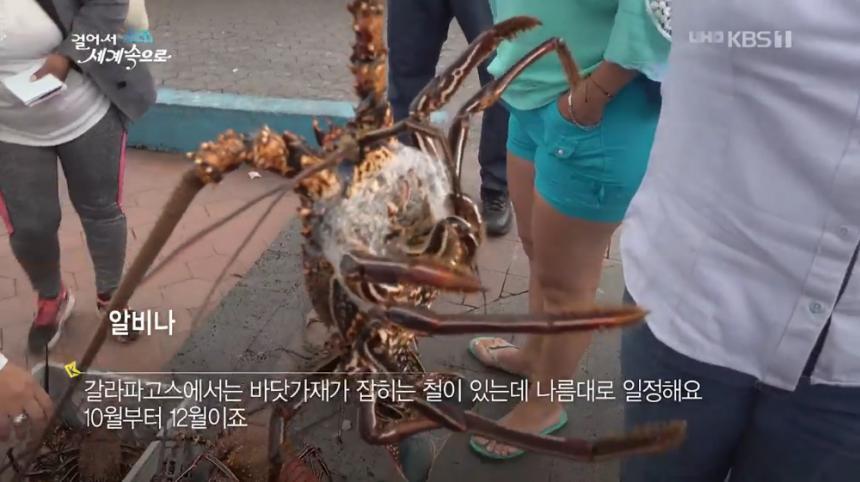 KBS1 '걸어서 세계속으로' 방송 캡처