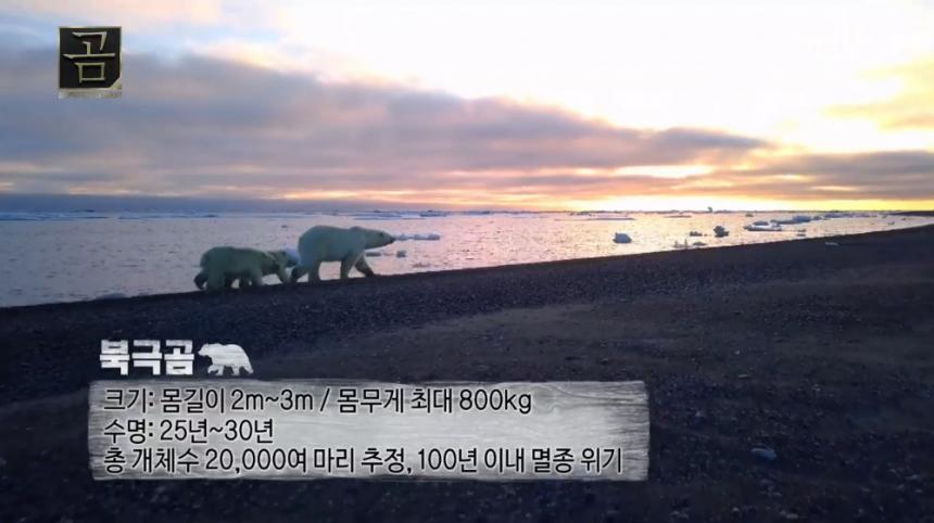 MBC '곰' 방송 캡처