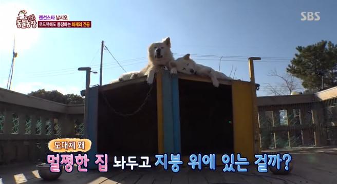 SBS 'TV 동물농장' 방송 캡처