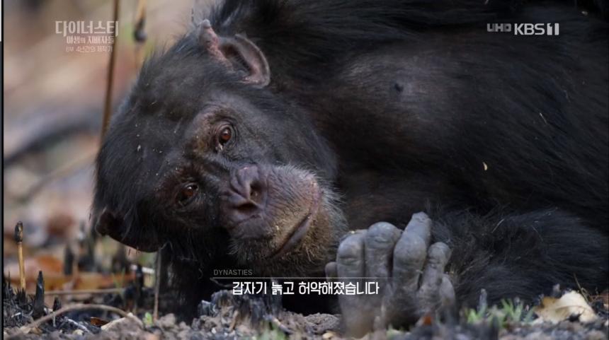 KBS1 '설 특선 다큐멘터리 다이너스티 야생의 지배자들 - 제6편 4년간의 제작기' 방송 캡처
