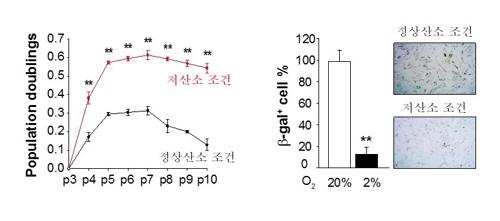 저산소 배양에 의한 모유두세포 증식 증가와 노화 방지 효과 [한국연구재단 제공=연합뉴스]