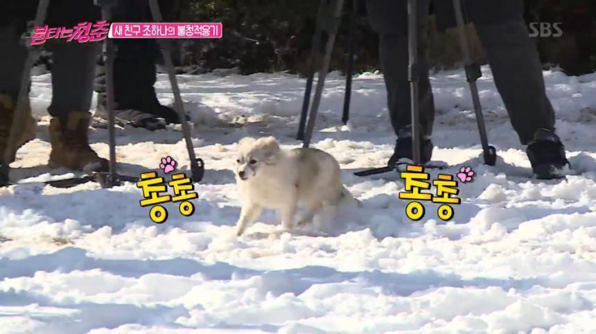 SBS '불타는 청춘' 방송 캡처