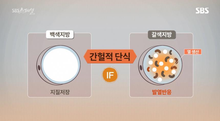 'sbs스페셜' 방송캡처