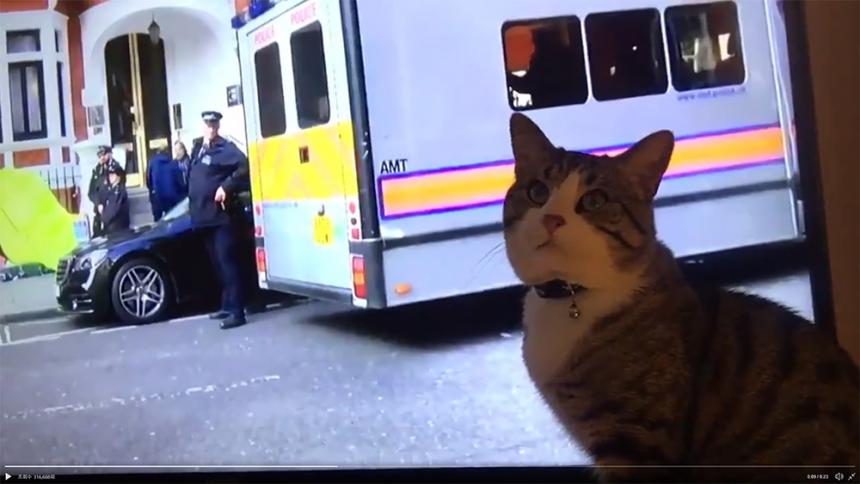 줄리언 어산지의 고양이 / 위키리크스 트위터