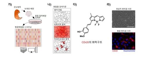 미세 아교세포 특이적인 형광체 CDr20 선별 원리[기초과학연구원 제공]