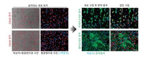 연구진은 살아있는 일차배양 뇌세포에 염색된 CDr20 사진을 찍은 뒤 미세 아교세포 면역염색 결과와 대조했다. 그 결과 CDr20이 미세 아교세포만을 특이하게 염색한다는 사실을 확인했다. [기초과학연구원 제공]