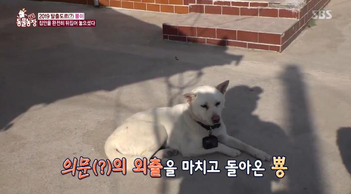 [종합] 'TV 동물농장' 걸핏하면 탈출하는 강아지 뿅이+사춘기 물범 꼬...