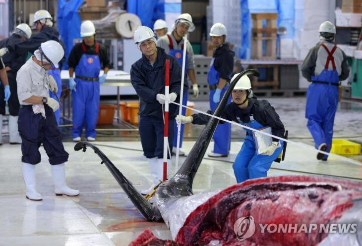 2019년 7월 1일 일본 홋카이도 구시로 항에서 밍크고래 해체작업이 진행되고 있다. [EPA=연합뉴스]