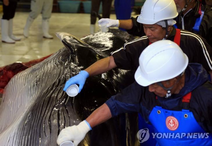 2019년 7월 1일 일본 홋카이도 구시로 항에서 해체작업에 앞서 작업자들이 고래의 몸에 술을 뿌리고 있다. [로이터=연합뉴스]