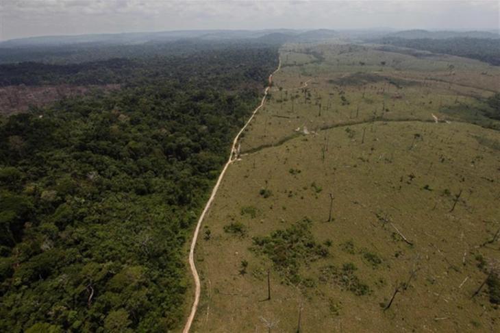 사라진 아마존의 열대우림 / 뉴시스