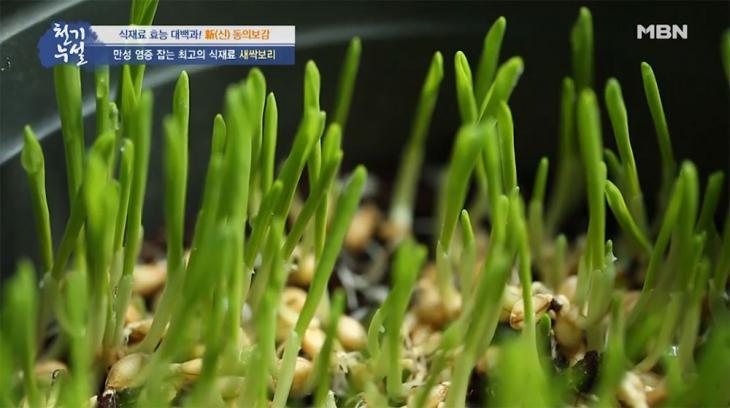 새싹보리분말 / MBN '천기누설' 방송 캡처