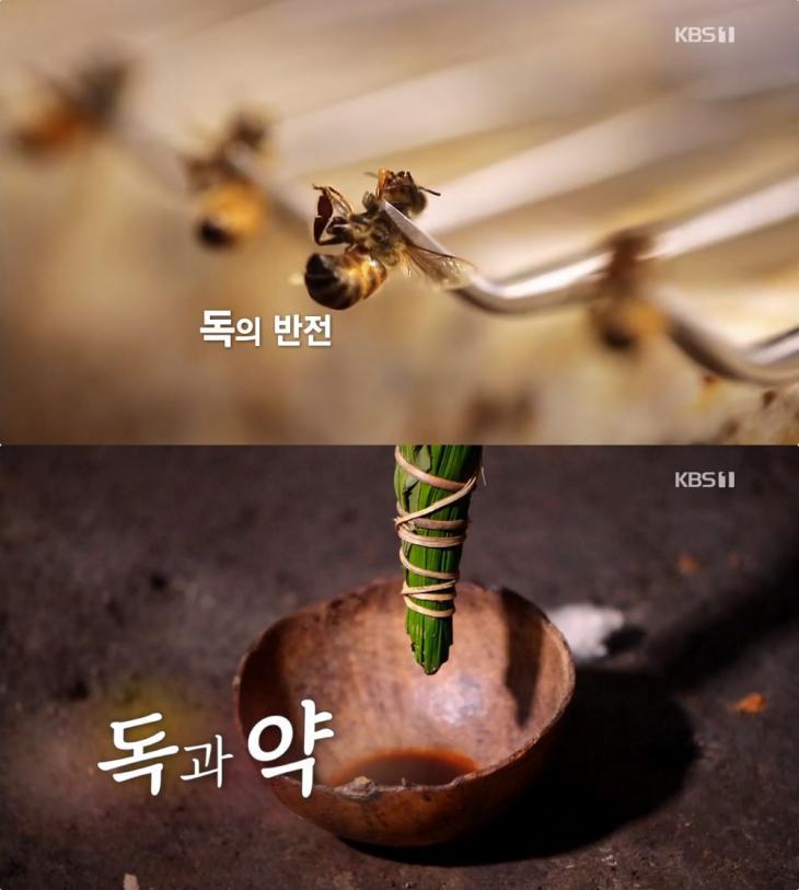 KBS 'KBS 스페셜' 방송 캡처