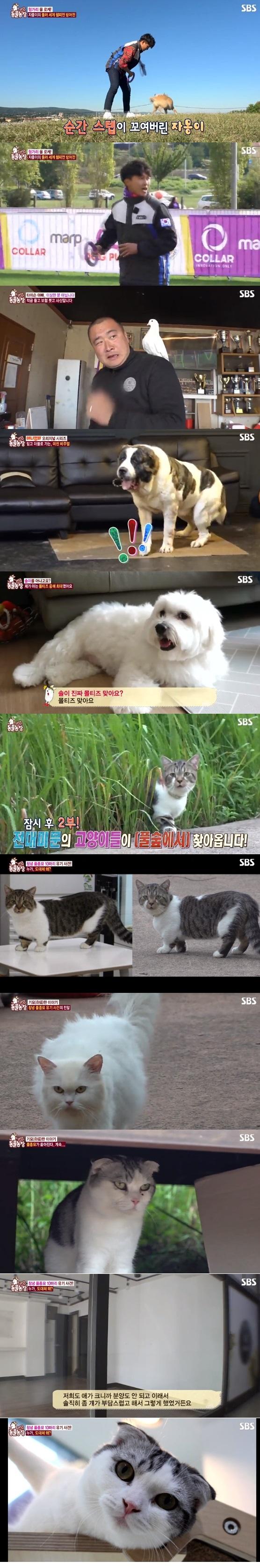 SBS 'TV동물농장' 캡처