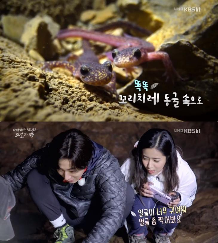 KBS1 '다큐인사이드' 방송 캡처
