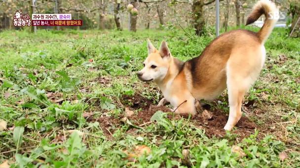 SBS 'TV동물농장' 방송 캡처