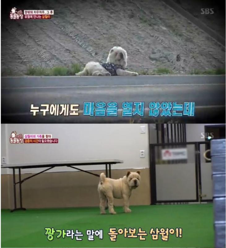 'TV동물농장' 삼월이 / SBS 'TV동물농장'