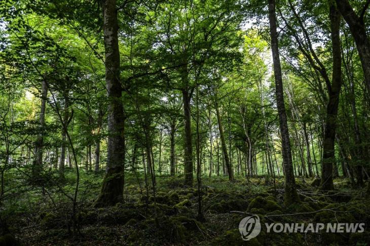 프랑스 샹파뉴 지방의 숲. 기사 내용과 직접적 관련 없음. [AFP=연합뉴스 자료사진]