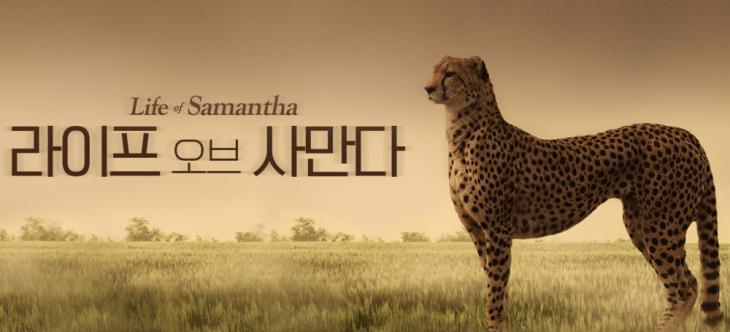 SBS '라이프 오브 사만다' 홈페이지 캡처