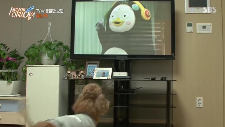 SBS 시사교양 프로그램 '세상에 이런 일이'