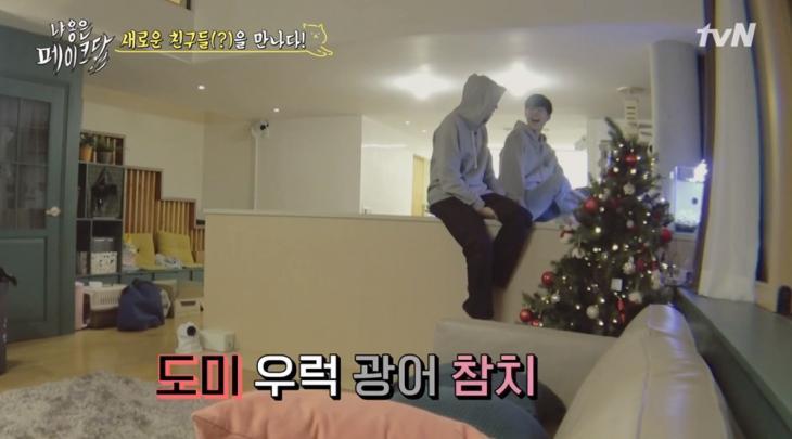 tvN '냐옹은 페이크다' 방송 캡처