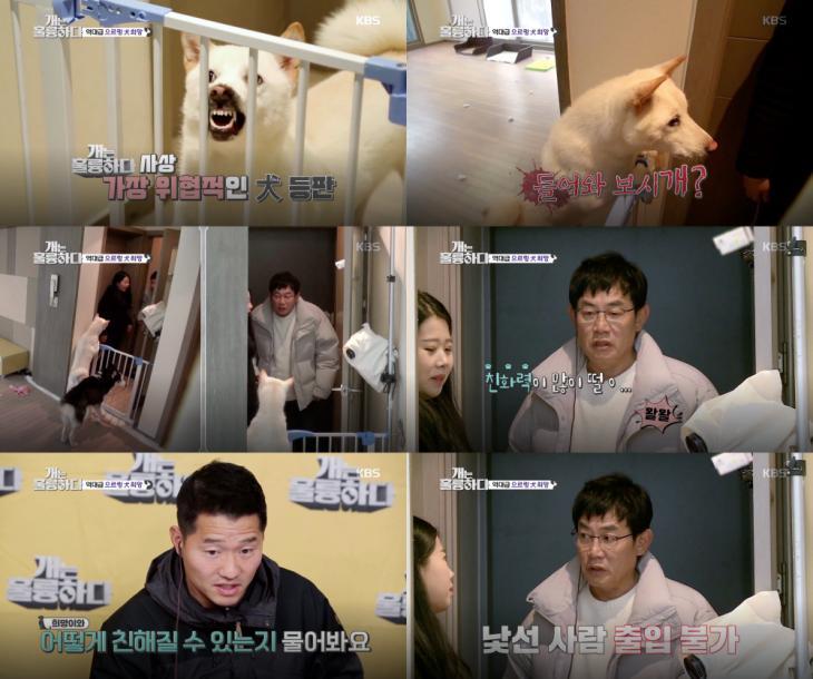 KBS2 '개는 훌륭하다' 방송 캡처