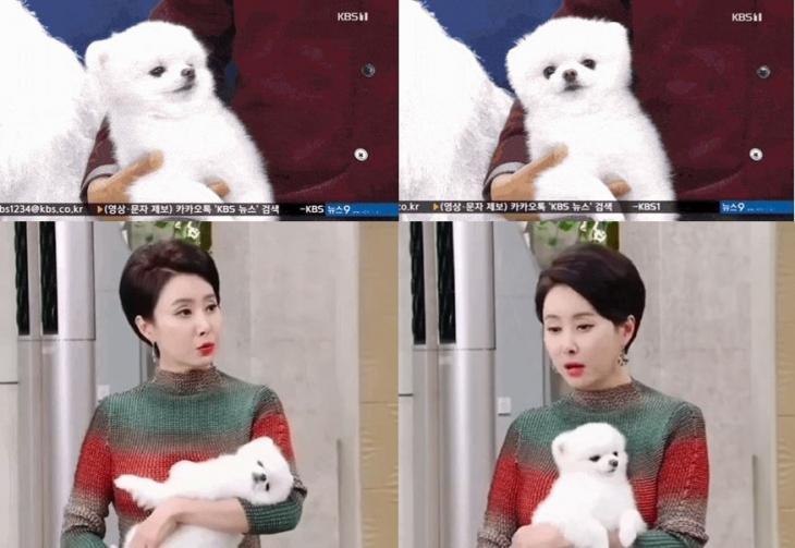 KBS '꽃길만 걸어요' 방송 장면 / 온라인 커뮤니티