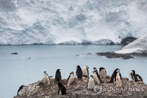 남극 엘리펀트섬 펭귄 무리 / 연합뉴스