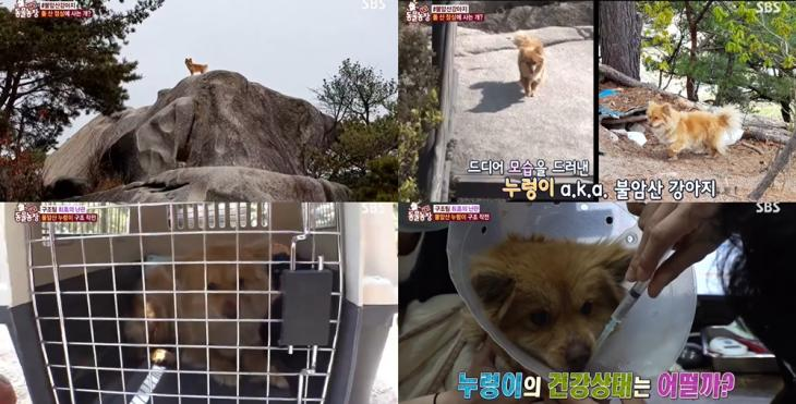 SBS 'TV 동물농장'방송캡처